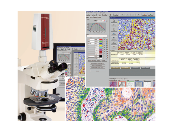 Wide-Field NUANCE Microinjection Upright Microscope